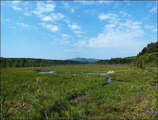 Adirondack Wetlands:  Saint Regis Mountain and Heron Marsh (1 June 2013)