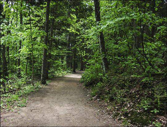 Adirondack Habitats: Mixed forest on the Barnum Brook Trail (1 June 2013)