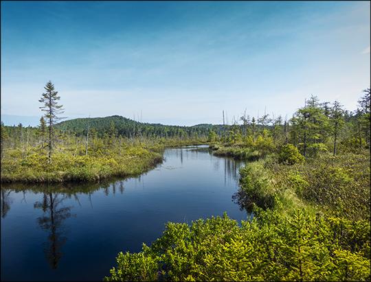 Adirondack Wetlands:  Barnum Brook and Barnum Bog (1 June 2013)