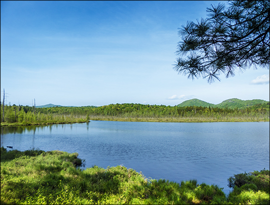 Adirondack Wetlands: Barnum Pond from the Boreal Life Trail overlook (1 June 2013)
