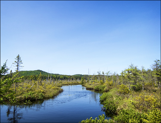 Adirondack Wetlands:  Barnum Bog at the Paul Smiths VIC (6 June 2015)