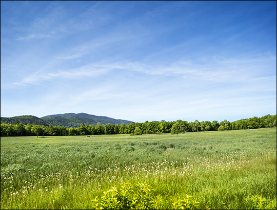 Great Adirondack Birding Celebration 2015: Heaven Hill Farm (7 June 2015)