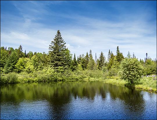 Great Adirondack Birding Celebration 2015: John Brown Farm Pond (7 June 2015)