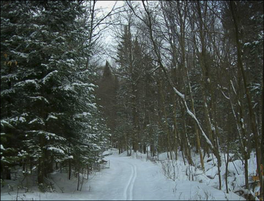 Jenkins Mountain Trail in winter