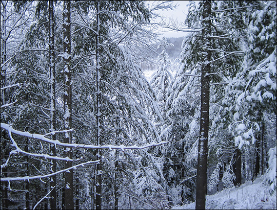 Logger's Loop Trail (12 December 2014).  Photo by Don Kirche.  Used by permission.