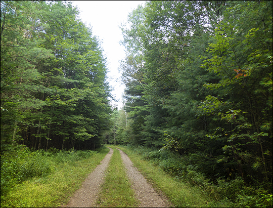 Adirondack Habitats: Deciduous forest on the south side of Logger's Loop (23 August 2013)