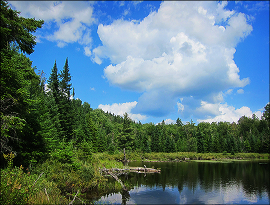 Adirondack Habitats:  Mixed forest on the north end of Long Pond (16 August 2012)