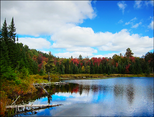 North end of Long Pond near the lean-to (27 September 2012)