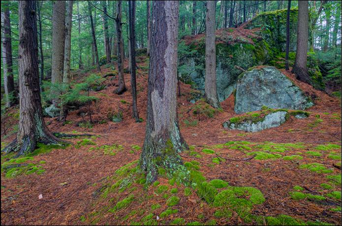 John DiGiacomo:  Forest Floor
