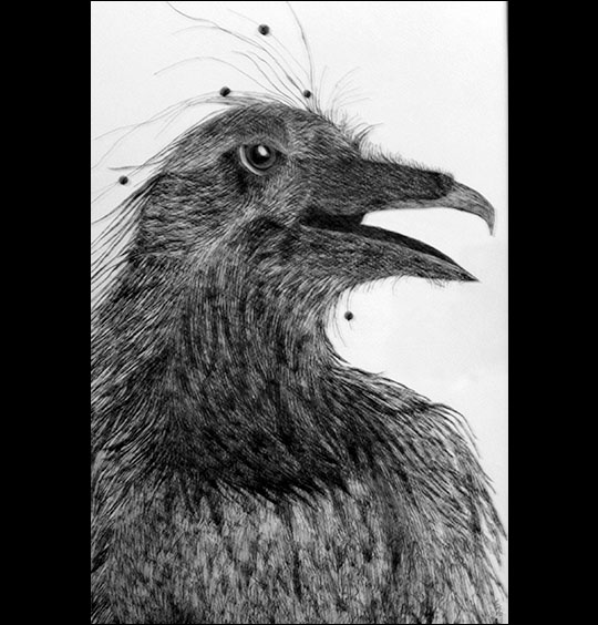 Linda Sauther: Shaman Crow.  Pen and ink.