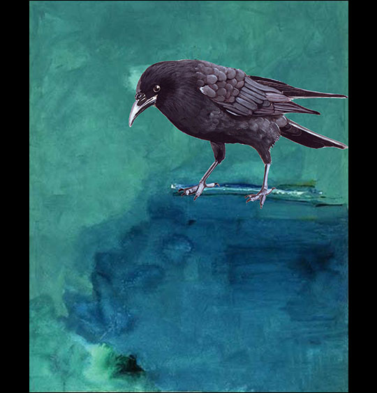 Linda Sauther: Curious Crow.  Digital art.