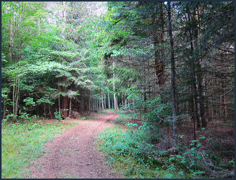 Adirondack Habitats:  Mixed hardwood-conifer forest along the Silviculture Trail at the Paul Smiths VIC