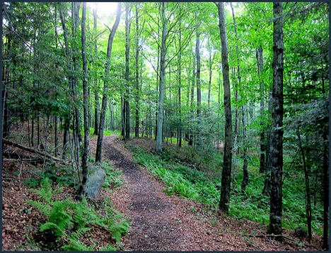 Adirondack Forest Communities:  Hardwoods along the Silviculture Trail at the Paul Smiths VIC