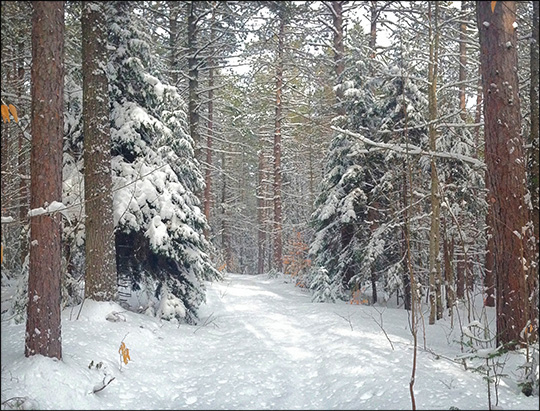 Adirondack Ski Trails: Skidder Trail at the Paul Smiths VIC.  Photo by Sandra Hildreth.  Used by permission.