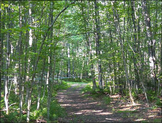 Paul Smiths VIC Sugar Bush on the Skidder Trail (19 August 2013)
