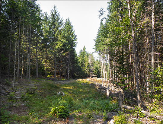 Adirondack Habitats: Recently-logged section of the Skidder Trail (19 August 2013)