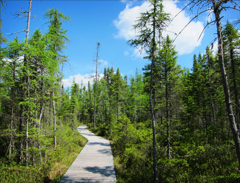 Adirondack Wetlands: Boreal Life Trail boardwalk over Barnum Bog at the Paul Smiths VIC