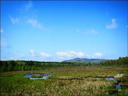 Adirondack Wetlands:  Heron Marsh from the Barnum Brook Trail at the Paul Smiths VIC
