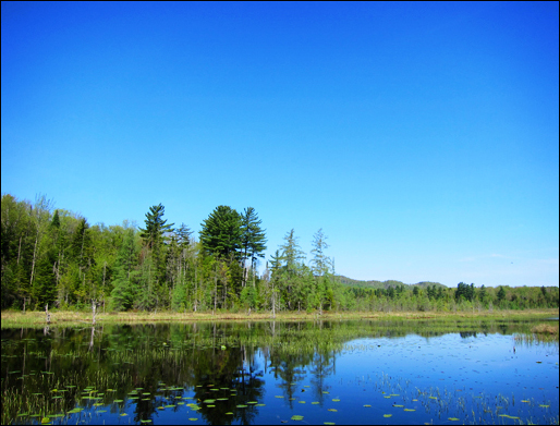 Adirondack Wetlands:  Heron Marsh from the floating bridge at the Paul Smiths VIC