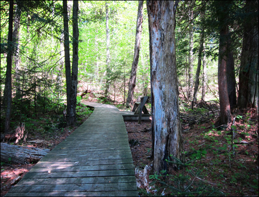 Adirondack Forest Communities:  Mixed conifer-hardwood forest at the Paul Smiths VIC