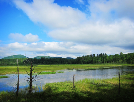Adirondack Wetlands: Heron Marsh from the Heron Marsh Trail at the Paul Smiths VIC