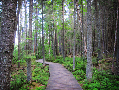 Adirondack Wetlands:  Boreal Life Trail Boardwalk at the Paul Smiths VIC
