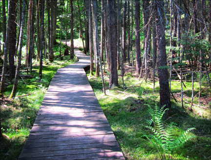 Adirondack Wetlands:  Boreal Life Trail boardwalk