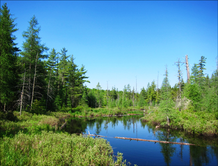 Adirondack Wetland:  Canoe Launch at the Paul Smiths VIC