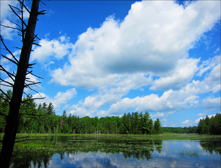 Adirondack Wetlands: Heron Marsh at the Paul Smiths VIC