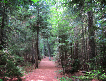 Adirondack Habitats: Conifers along the Heron Marsh Trail