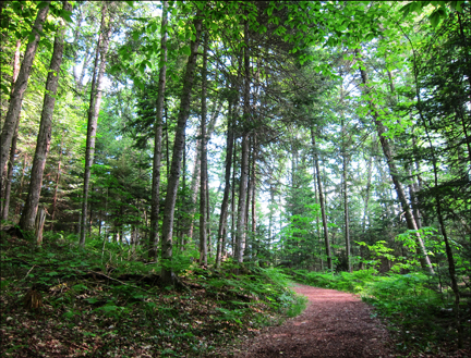 Adirondack Forest Communities:  Mixed hardwood-conifer forest