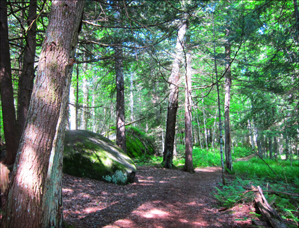 Adirondack Habitats: Mixed hardwood-conifer forest at the Paul Smiths VIC