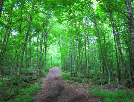 Adirondack Habitats:  Deciduous trees along the Jenkins Mountain Trail at the Paul Smiths VIC