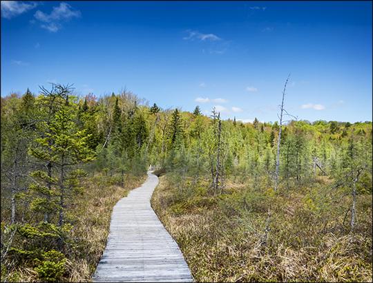 Adirondack Wetlands: Heron Marsh from the Heron Marsh Trail boardwalk (17 May 2015)