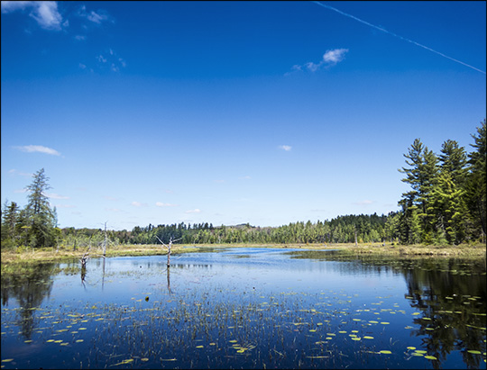 Adirondack Wetlands: Heron Marsh from the floating bridge on the Woods and Waters Trail at the Paul Smiths VIC (17 May 2015)