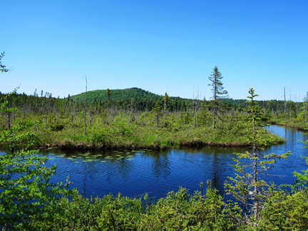 Adirondack Wetlands:  Barnum Bog from the Boreal Life Trail at the Paul Smiths VIC (3 June 2011)