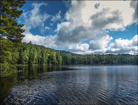 Adirondack Habitats:  Little Black Pond from the Woods and Waters Trail