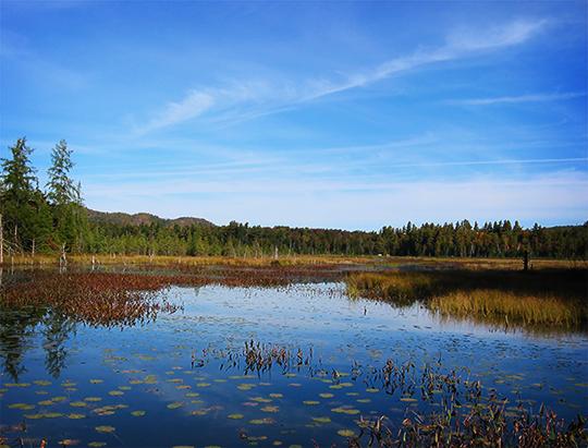 Adirondack Wetlands: Heron Marsh from the floating bridge (17 September 2004)
