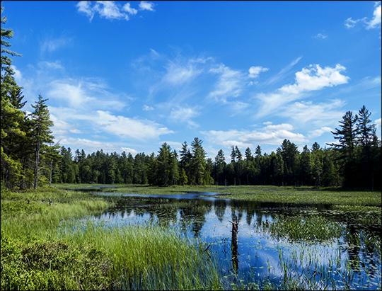 Adirondack Wetlands: Heron Marsh south from the floating bridge (17 June 2013)