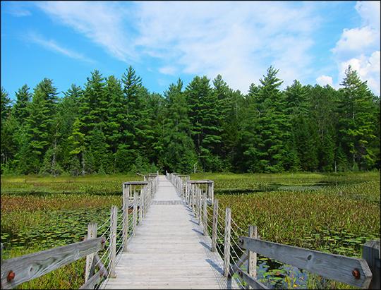 Adirondack Wetlands: Floating Bridge over Heron Marsh (25 August 2012)