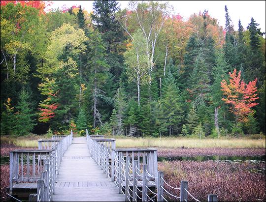 Adirondack Wetlands: Floating Bridge over Heron Marsh (29 September 2012)