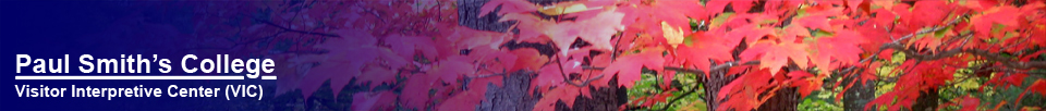 Jeri Wright:  Red Maple Panorama.  Copyright Jeri Wright.  Used by permission.