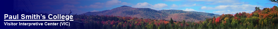 Paul Smiths VIC: St. Regis Mountain from the Barnum Brook Trail (27 September 2012)