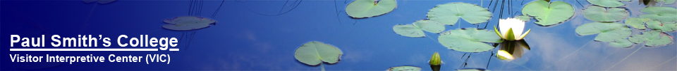 Adirondack Wildflowers:  Lily pads on Heron Marsh at the Paul Smiths Visitor Center