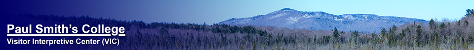 Saint Regis Mountain from the Barnum Brook Trail (23 April 2013)