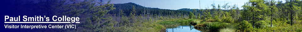 Adirondack Wetlands:  Barnum Bog from the Boreal Life Trail at the Paul Smiths VIC (27 July 2013)