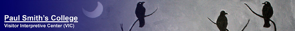Caw-ling. Detail from a painting by Arnold Sauther.