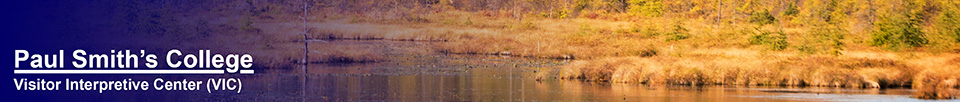 Adirondack Wetlands:  Heron Marsh (6 October 2014)