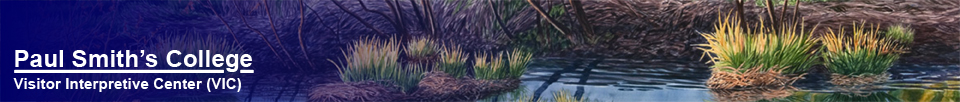 Detail of a painting by Tim Fortune: Adirondack Wetland