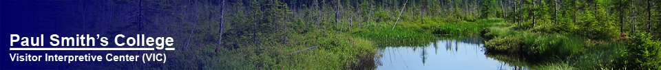Adirondack Wetlands: Barnum Bog at the Paul Smiths VIC